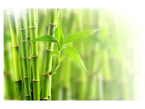 immagini di bambù