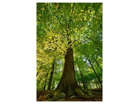 immagini albero