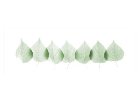 immagini foglie