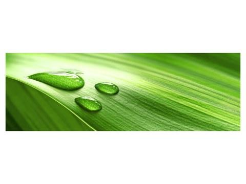 immagini verdi