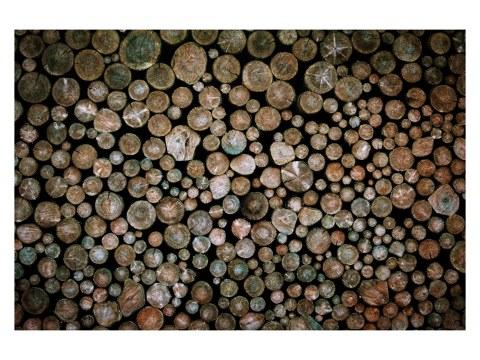 Holz Motiv