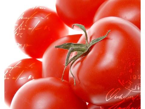Tomaten Bilder