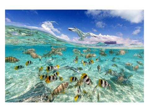 Unterwasser Foto